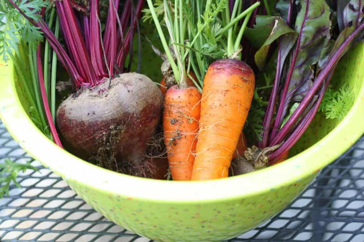 making the best roasted fall vegetables starts with high quality produce like garden veggies